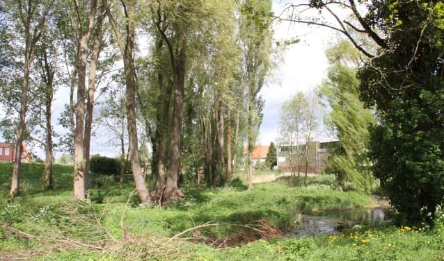 Het stukje bos op het terrein De Rokerij.