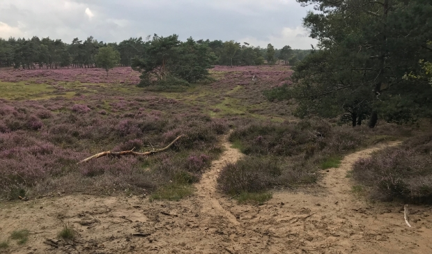 <p>Heide bij Bornia</p>