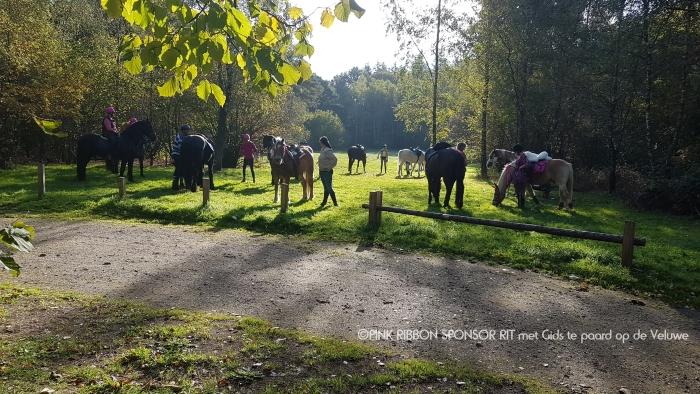 Bij aanvang van de rit maken de paarden op een relaxte wijze kennis met elkaar.  Nanda van Doorn © BDU Media