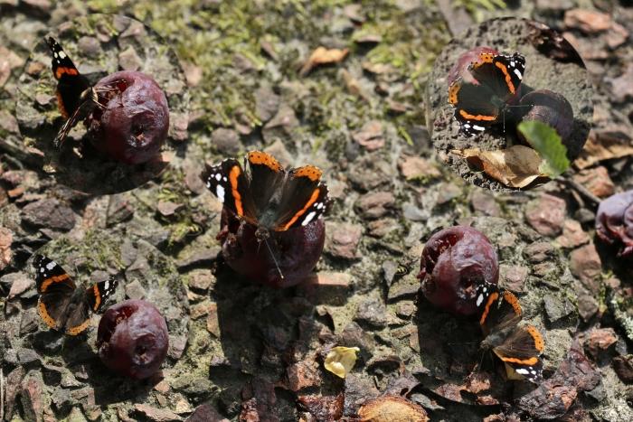 Atlanta vlinders op pruimen