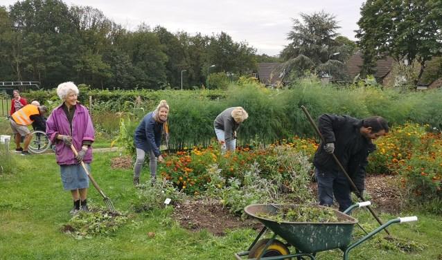 De vrijwilligers zorgen er voor dat de dorpsakker er mooi bij ligt voor het oogstfeest. Middelste dame is Esther Gijsbertsen.
