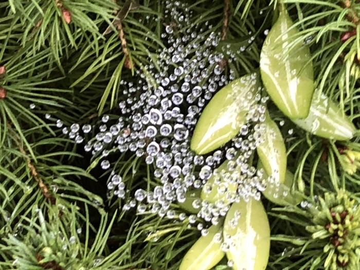 Pareltjes gevangen in een spinnenweb