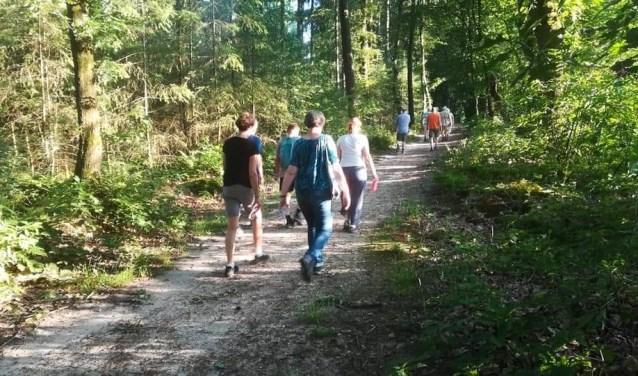 De paden op, de lanen in. Het is mooi wandelen op de Utrechtse Heuvelrug.