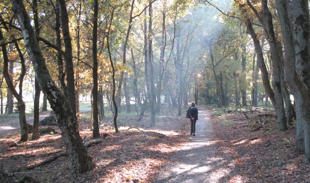 Een heerlijke herfstwandeling in de bossen bij Mossel.