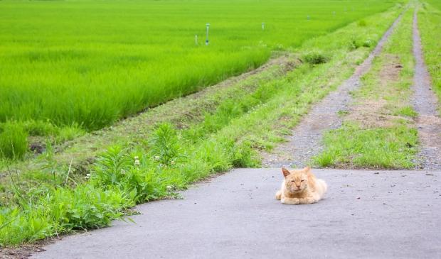Een zwerfkat in het buitengebied.