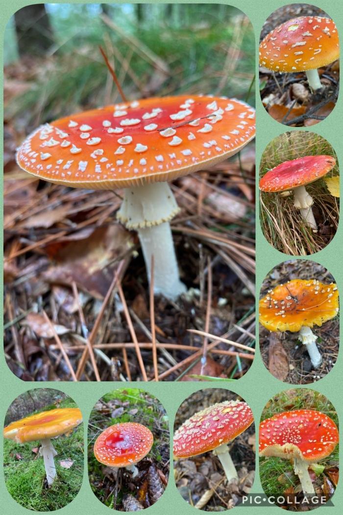 Collage Hennie Prinsen  © BDU media