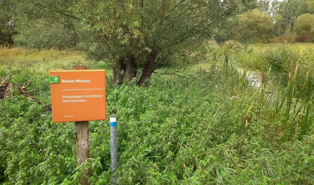 <p>Bos Nieuw Wulven</p>