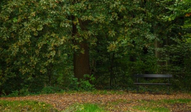 <p>Ruimte voor nieuw bos en een woning op terrein voormalig recreatiepark.</p>