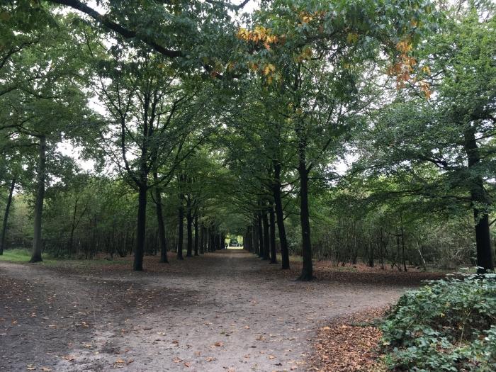 Het Baarnse Bos Willy van Dijk-Doornenbal © BDU media
