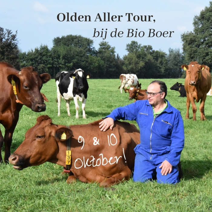 Aart van de Beek tussen zijn koeien Tilly van de Beek © BDU media