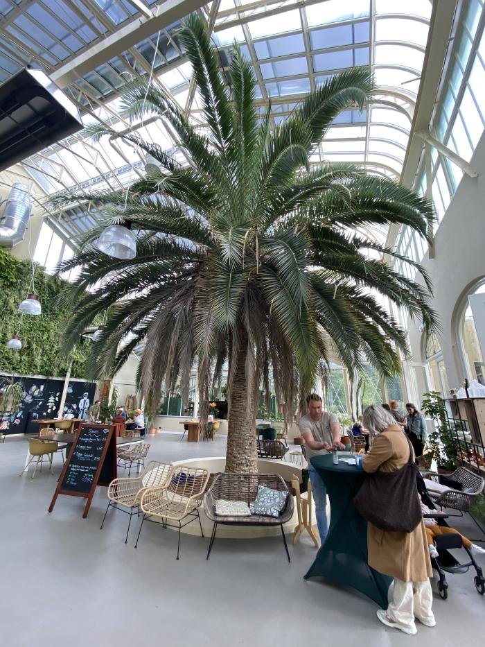 Prachtige palmboom Hennie Prinsen © BDU media