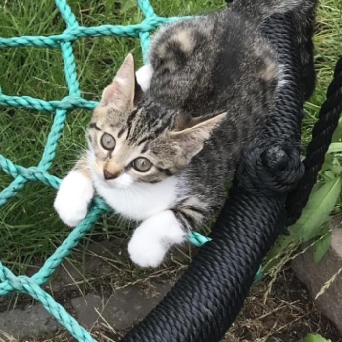 Vermist kitten Schoutenstraat Barneveld