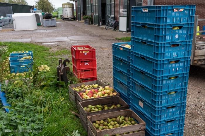 Het fruit staat klaar René van den Brandt © BDU media