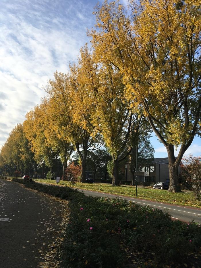 Bomen langs de Bestevaerweg Willy van Dijk-Doornenbal © BDU media