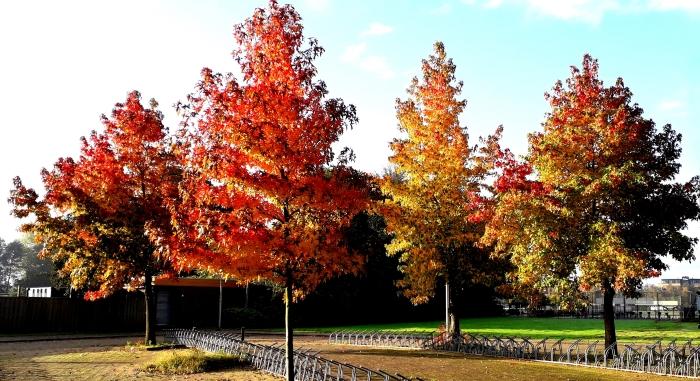 De in herfstkleuren getooide bomen voor het Amstelbad op zondagochtend 18 oktober.