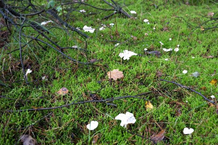 sporen genoeg in het bos Klaas Haitsma © BDU media
