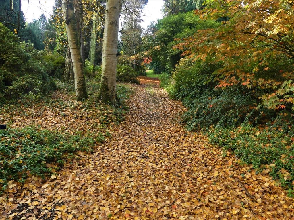 Herfstplaatje uit Amelisweerd. Elly-Ann van Luxemburg © BDU media