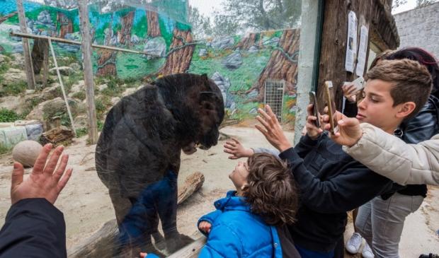 Mensen staan voor een zwarte panter in de dierentuin foto's te maken