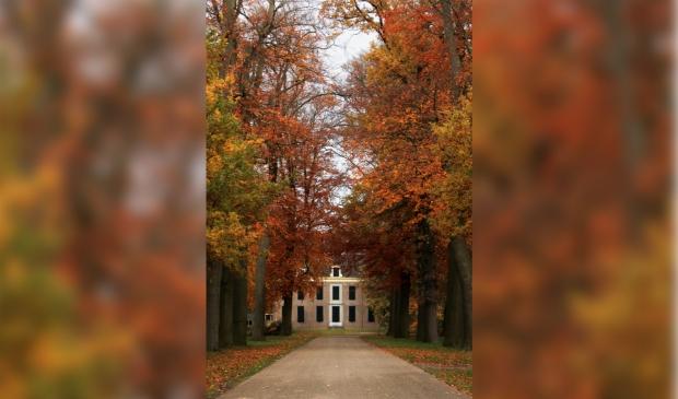 Herfst op Landgoed Amelisweerd Wessel Veenbrink © BDU media