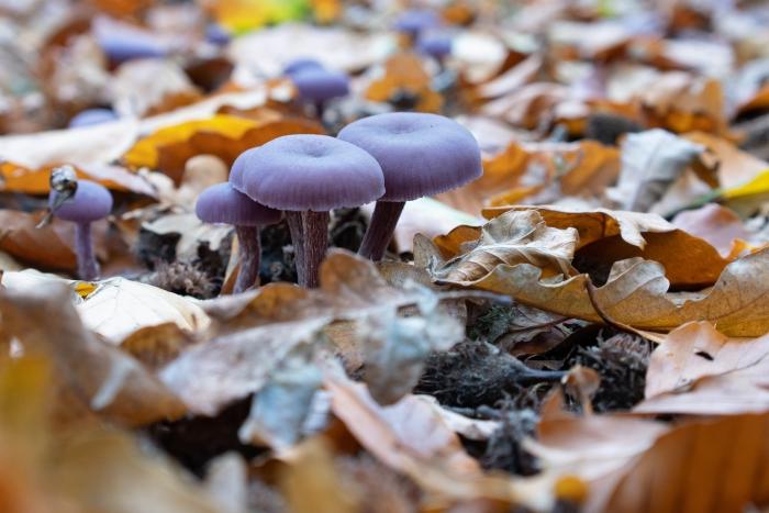 de herfst in volle glorie Klaas Haitsma © BDU media