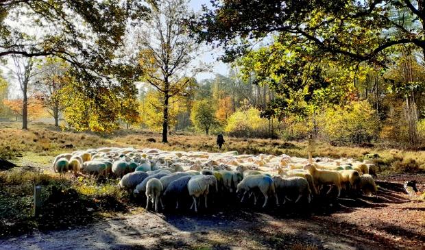 <p>Foto op 4 november gemaakt tijdens een fietstocht door het Amerongse bos.</p>