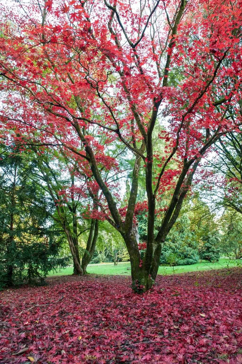 <p>Gemaakt in het Arboretum in Doorn</p> Linda van Dam © BDU