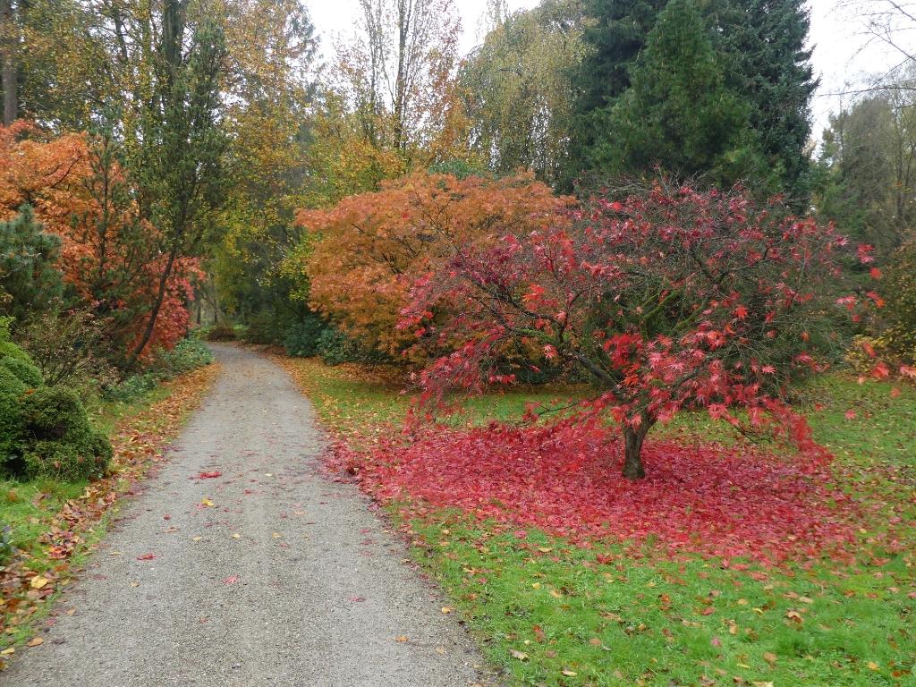 Herfstplaatje uit het Arboretum in Doorn. Elly-Ann van Luxemburg © BDU media