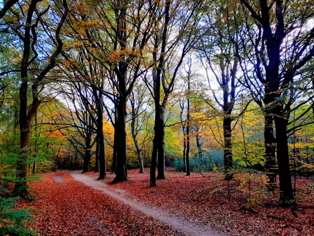 <p>Foto op 4 november gemaakt tijdens een fietstocht door het Amerongse bos.</p> <p>Jan van Tellingen&nbsp;&nbsp;&nbsp;&nbsp;&nbsp;&nbsp;&nbsp;&nbsp;</p> © BDU