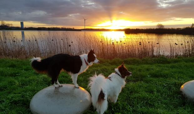 Wandeling honden om de plas
