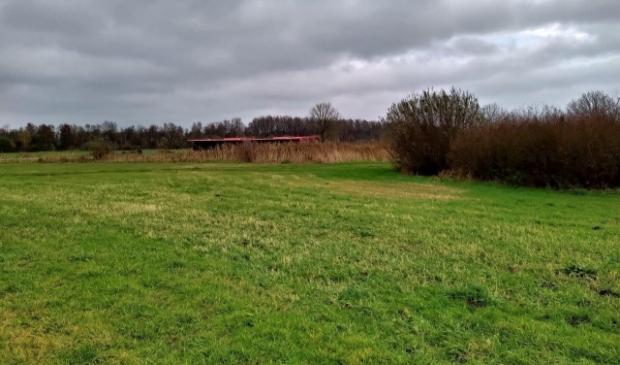 Wilgenbosjes nabij de Zuidtangent