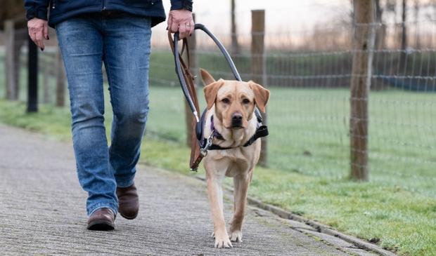 <p><strong>Onderzoek KNGF Geleidehonden: levenskwaliteit van dik onvoldoende naar 8,2 dankzij hulphond.</strong></p>