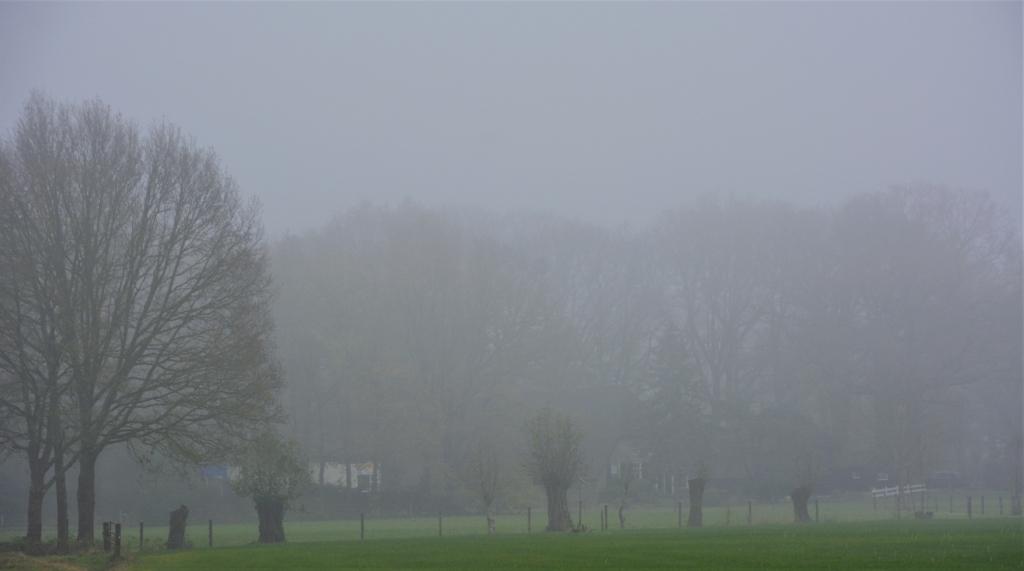 <p>Bomen in de mist bij de Hessenweg.</p> <p>Gerwin van Luttikhuizen</p> © BDU Media