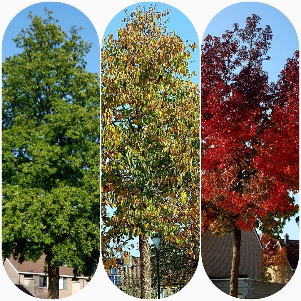 """,,De mooiste boom in de wijk De Horden. Elk jaar geniet ik weer van deze boom."""" Marja Verburg © BDU media"""