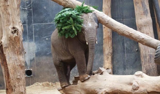 <p>Thabo, in december vorig jaar met een kerstboom.</p>