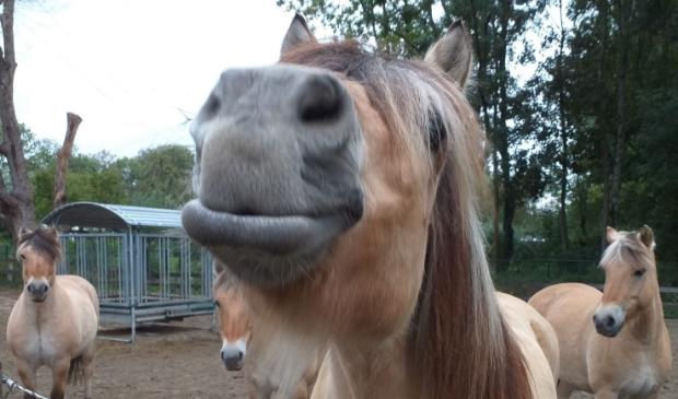 <p>Een aantal van de pony's van 'De Boldermanege'.</p>