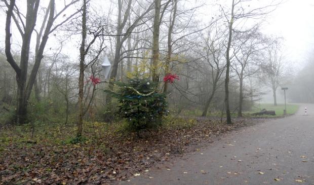 Kerstboom in het Haarlemmermeerse Bos