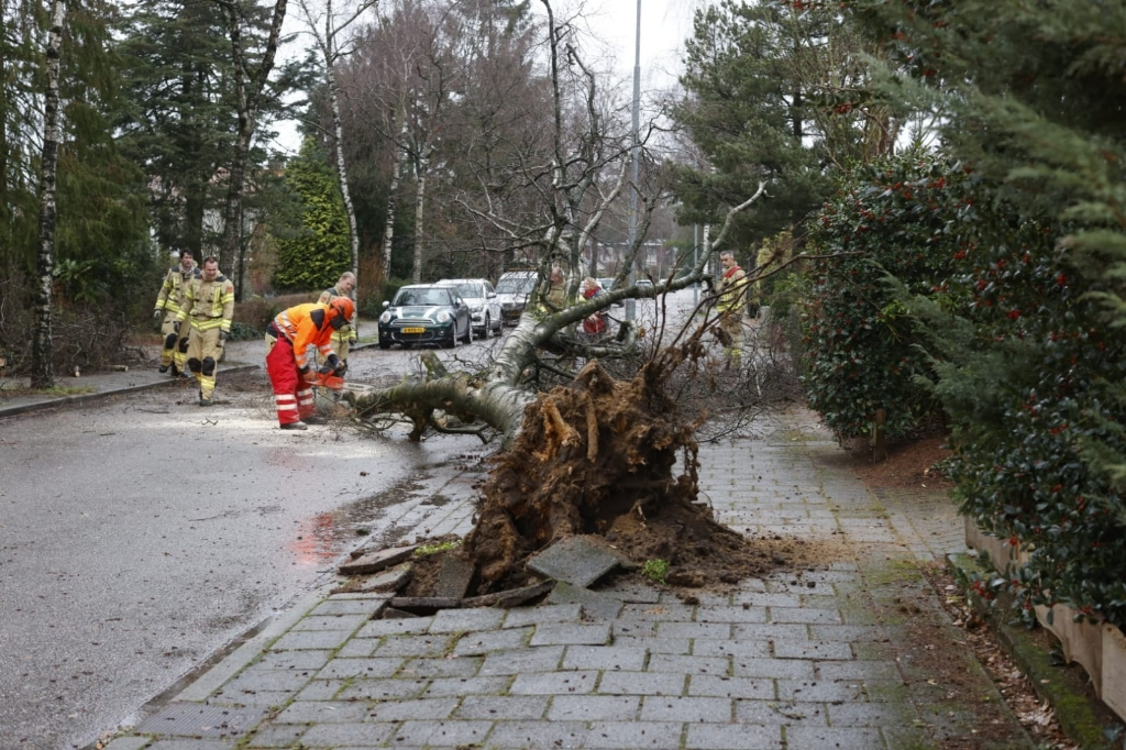 Op de Irenelaan waaide een boom tegen een lantaarnpaal Ted Walker © BDU Media