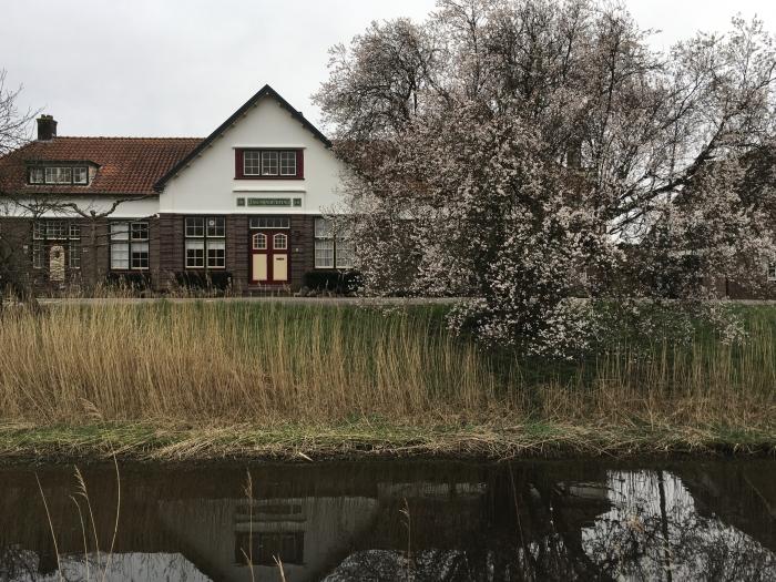 Bloeiende prunus voor het oude zwembad Willy van Dijk-Doornenbal © BDU media