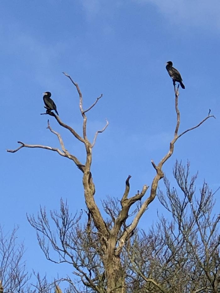 Eenden hoog in de boom Hennie Prinsen © BDU media