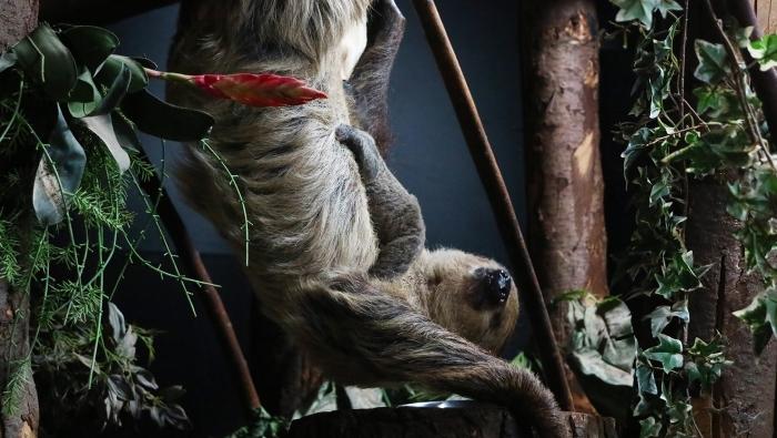 Moeder met luiaardjong Dierenpark Amersfoort © BDU media