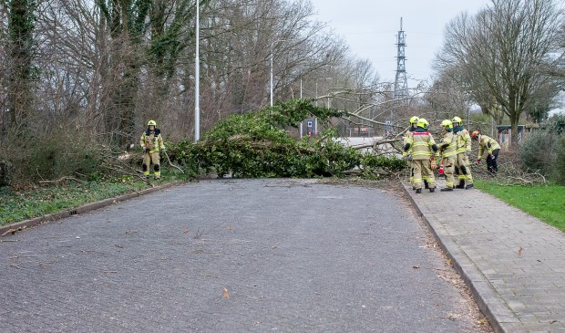 Een boom viel over de weg op de Noorder Parallelweg Ted Walker © BDU Media
