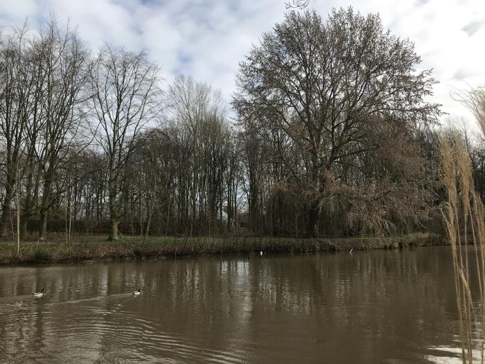 klimboom aan de Kromme Rijn