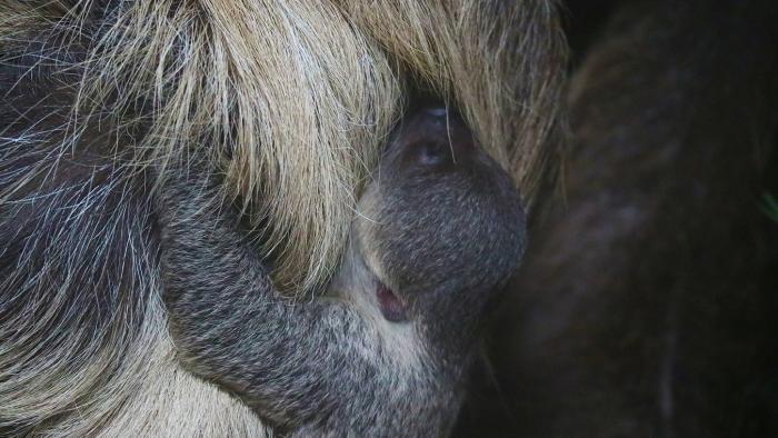 Luiaardjong Dierenpark Amersfoort © BDU media