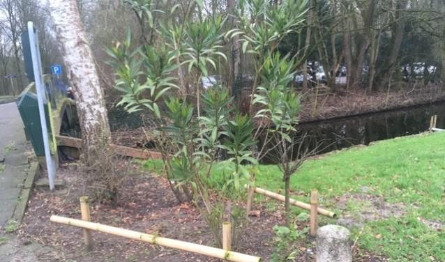 Het bewuste plantsoen moet de door de bewoner aangebrachte plantjes en kleine omheining.