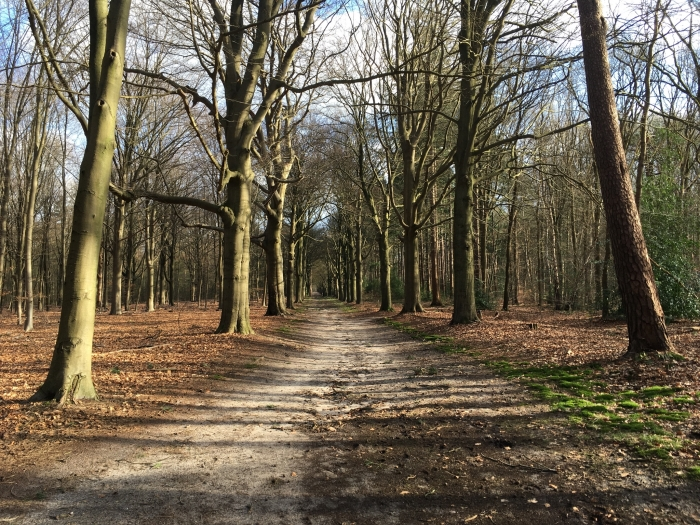 Een zonnige laan in het bos Willy van Dijk-Doornenbal © BDU media