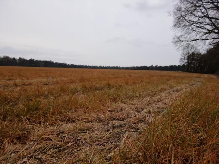 Akker langs de dr. Hartogsweg nabij Bosbeek Bennekom bespoten met glyfosfaat, voorjaar 2019.
