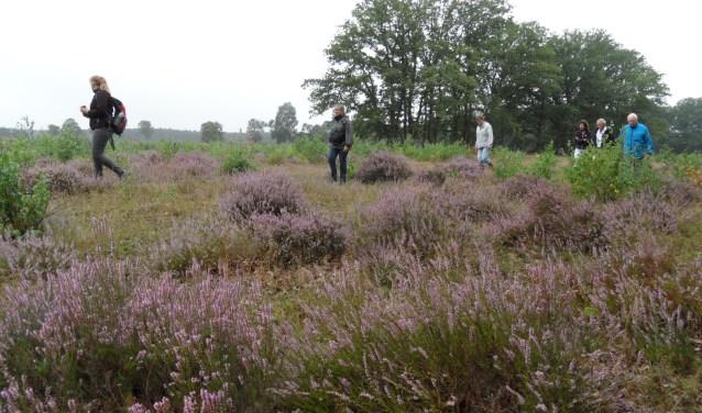 De Stroese Heide.
