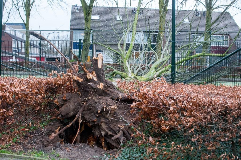 Een boom viel een voetbalkooi binnen op de Sint Hubertus in Ede Ted Walker © BDU Media