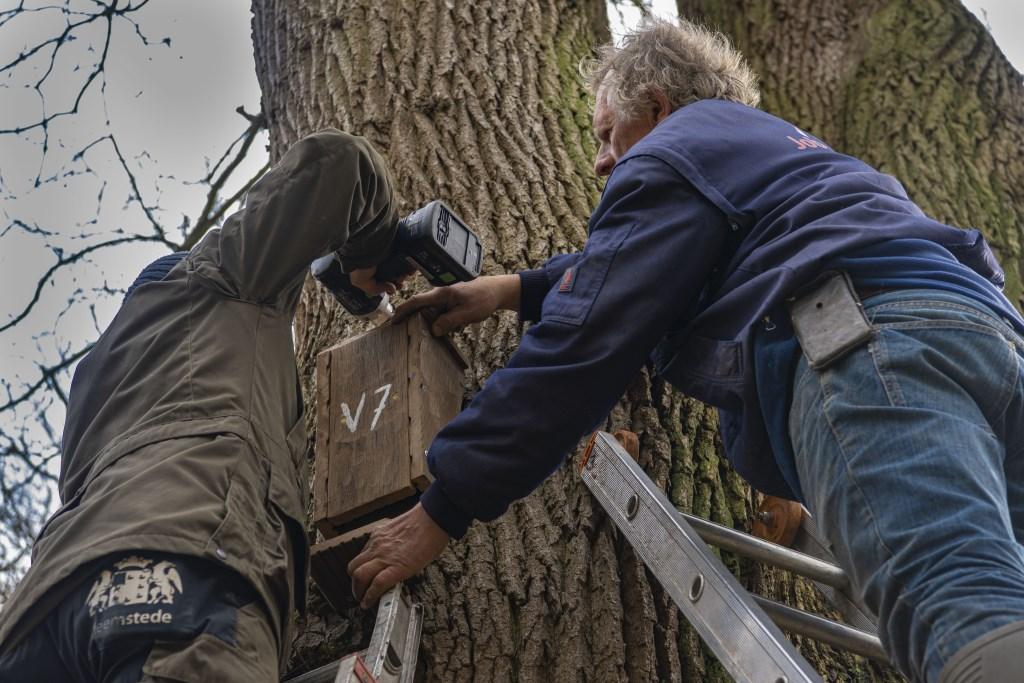 Boswachter Rogier Veldhuisen en Franke van der Laan bezig met het ophangen van een vleermuizenkast Ellen Toledo © BDU media