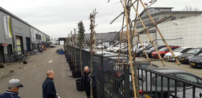 Medewerkers van het Kringloopcentrum plaatsen de bomen.